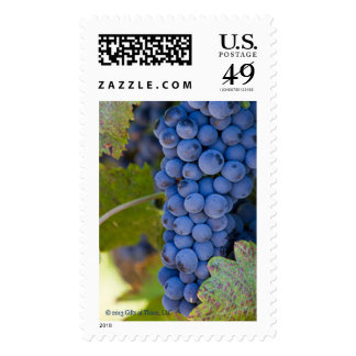 Sonoma Grapes, various rates -  20 Postage Stamps
