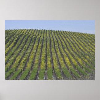 Sonoma Vineyard Print