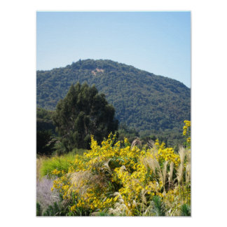Sonoma Wine Country Daisies Poster