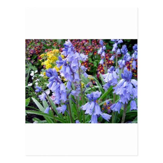 Sonoma Winery Spring Bouquet Postcard