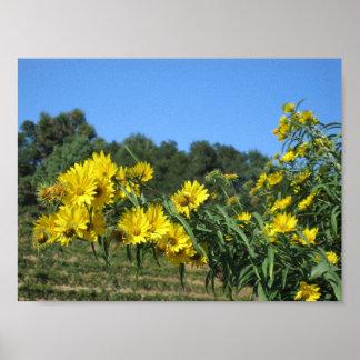 Sonoma Yellow Daisies Poster
