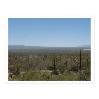 Sonora Desert Museum Postcard