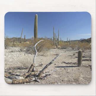 Sonoran Desert 01 Mouse Pad
