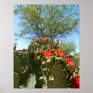 Sonoran Desert Cactus Print