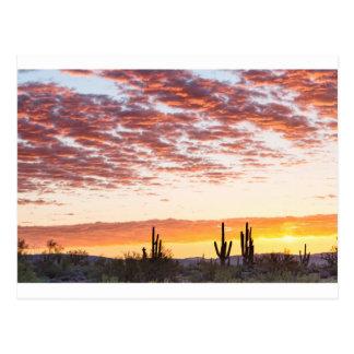 Sonoran Desert Colorful Sunrise Morning Postcard