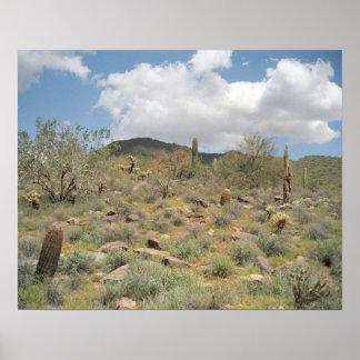 Sonoran Desert Pastoral Art Print Photo Posters