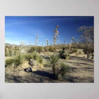 Sonoran Desert scene 01 Poster