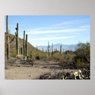Sonoran Desert Scene 02 Poster