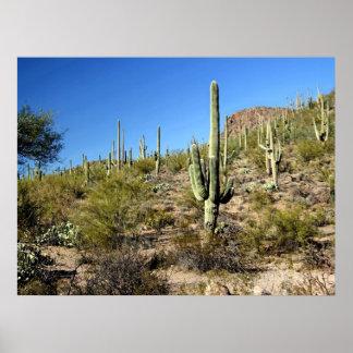 Sonoran Desert Scene 03 poster