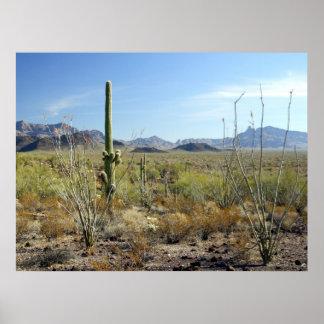 Sonoran Desert scene 09 poster