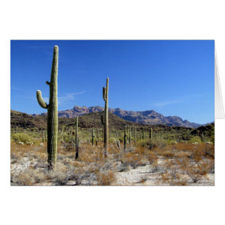 Sonoran Desert Scene 13 Card