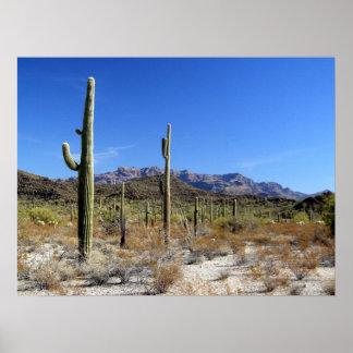 Sonoran Desert Scene 13 Print