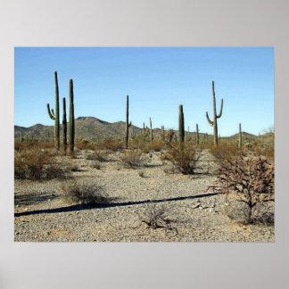 Sonoran Desert Scene 16 Poster
