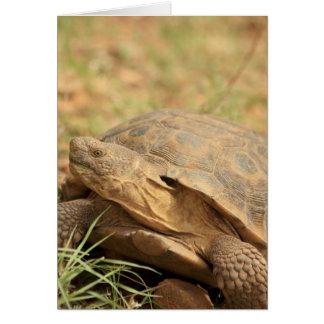 Sonoran Desert Tortoise Card