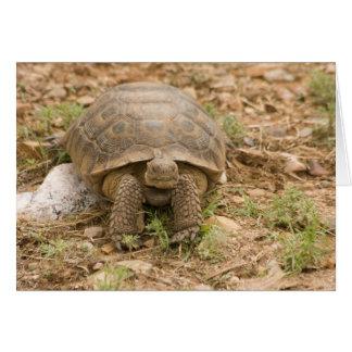 Sonoran Deset Tortoise Card