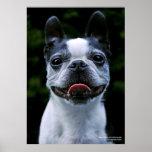 ¡Sonrisa! Boston Terrier Impresiones