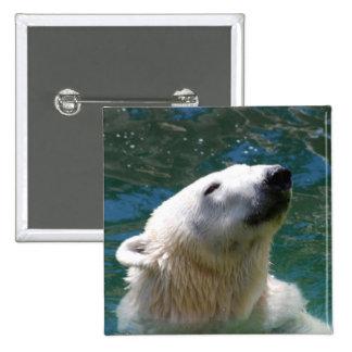 Sonrisa de los osos polares pin cuadrado