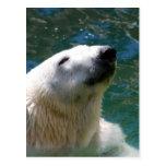Sonrisa de los osos polares postal