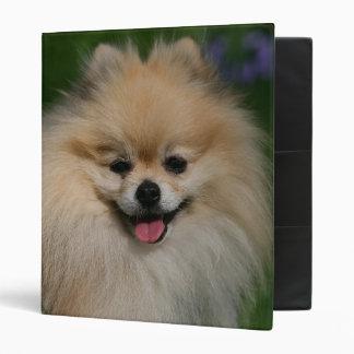 """Sonrisa de Pomeranian Carpeta 1"""""""