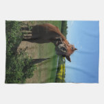 Sonrisa de un frente del caballo de un campo de la toalla