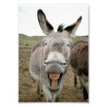 Sonrisa del burro fotos