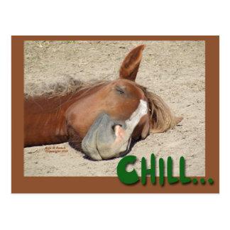 Sonrisa del caballo el dormir: Frialdad Tarjeta Postal