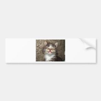 Sonrisa del gatito etiqueta de parachoque