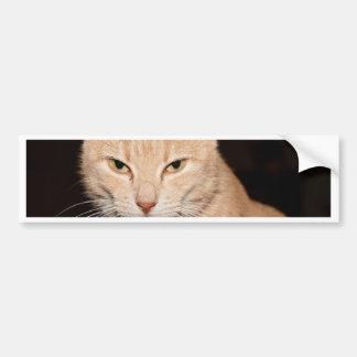Sonrisa del gato del gatito pegatina para coche