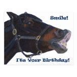 ¡Sonrisa!  ¡Es su cumpleaños! Caballo Tarjetas Postales