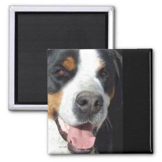¡Sonrisa! Mayor perro suizo de la montaña Imán Cuadrado