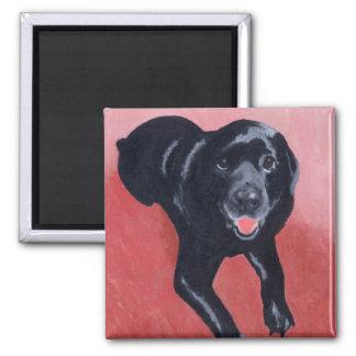Sonrisa negra de Labrador Imán Cuadrado