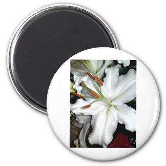 Sony Ericson phone pics Sept 09-Jan 11 311 2 Inch Round Magnet