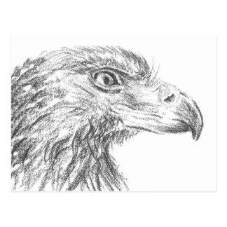 Soon Eagle portrait Postcard
