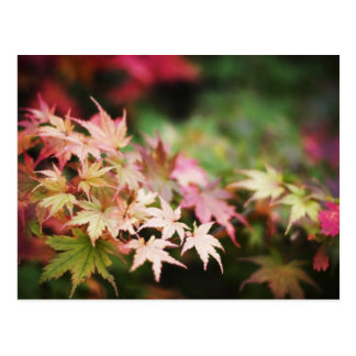 Soothing Nature Scene Japanese Maple Postcard