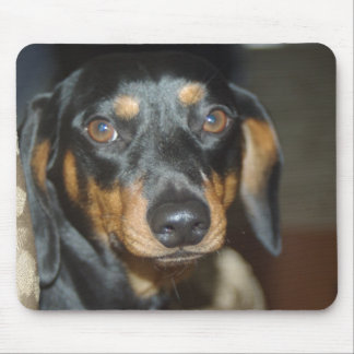 sophie the dashchund mouse pads