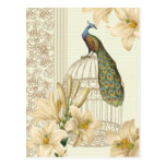Sophisticated vintage lily birdcage Peacock Postcard