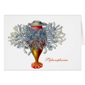 Sophonophorae Note Card