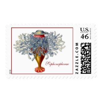 Sophonophorae stamp
