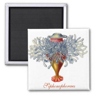 Sophonophorae Square Magnet