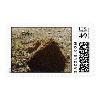 Soporte asimétrico de la casa de la hormiga sello