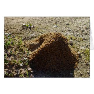 Soporte asimétrico de la casa de la hormiga tarjeton