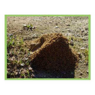 Soporte asimétrico de la casa de la hormiga postal