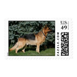 Soporte de la demostración del pastor alemán timbre postal
