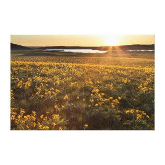 Soporte de los Wildflowers de Arrowleaf Balsamroot Impresión En Lienzo