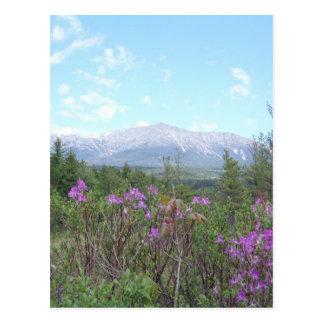 Soporte Katahdin y flores salvajes Tarjetas Postales