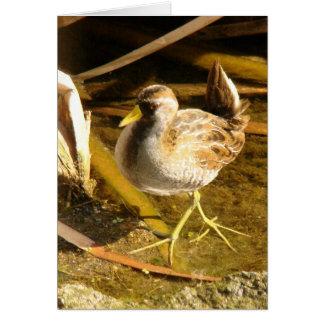Sora Bird Card