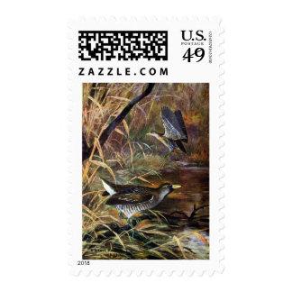 Sora Rails in a Marsh Stamp