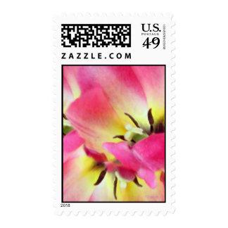 Sorbete floral sello