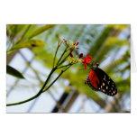 Sorbos de la mariposa felicitacion