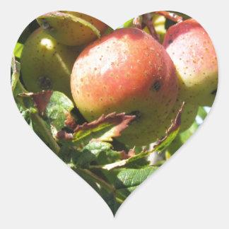Sorbs in fruit tree . Tuscany, Italy Heart Sticker